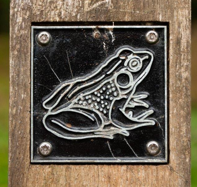 Frog brass rubbing