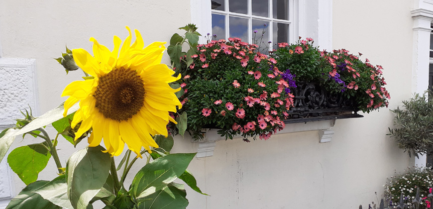 Success in the 2021 South and South East in Bloom awards