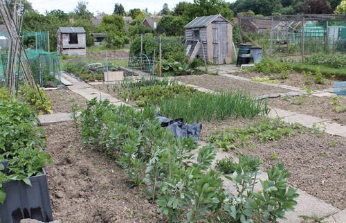 Picture of a new allotment ready to be planted