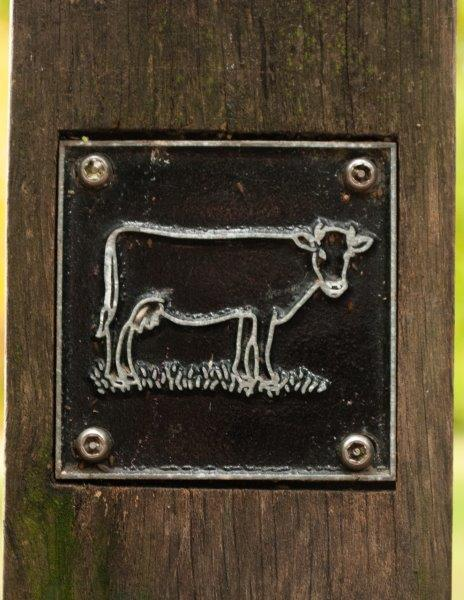 Cow brass rubbing