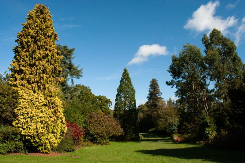 Trees in Dunorlan Park
