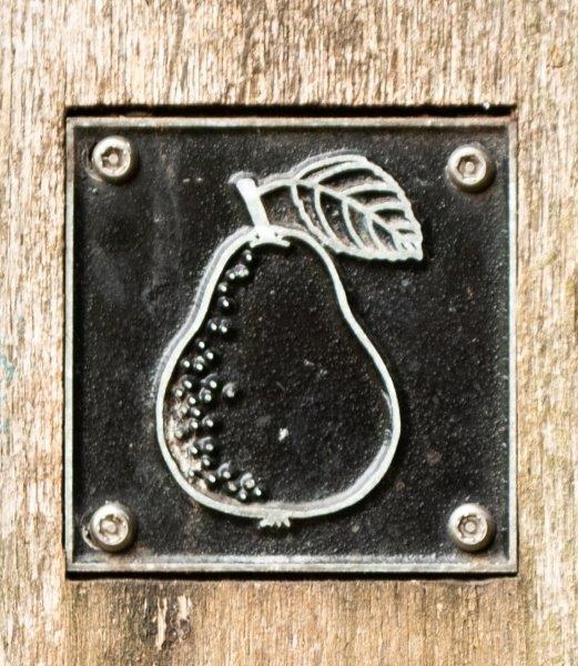 Pear brass rubbing