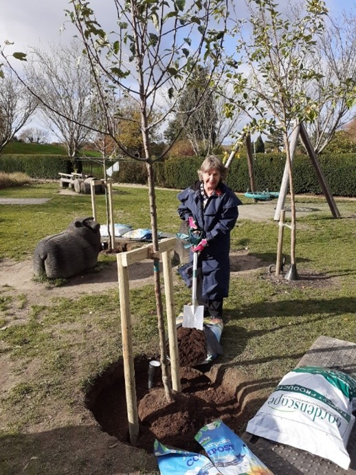Replanting the apple trees at Calverley Grounds