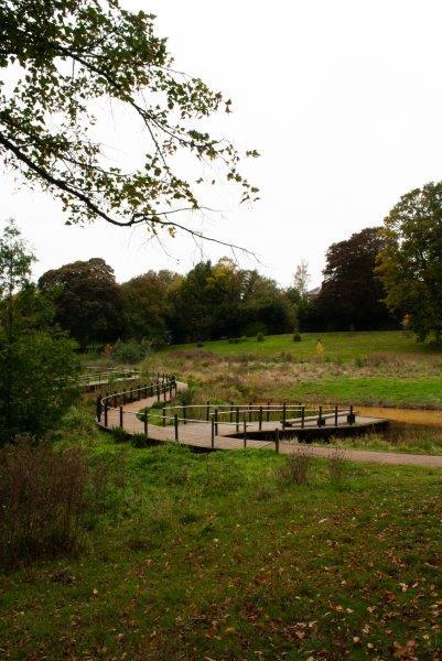 wetland path